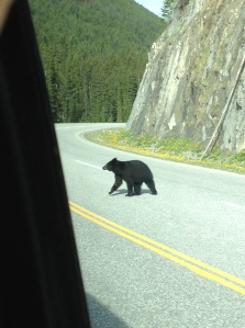 bear in radium